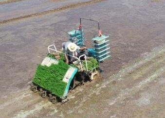 The farm is manned by an unmanned rice transplanter